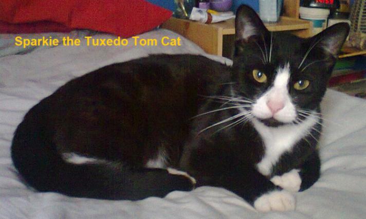 Sparkie Tuxedo Tomcat